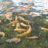 [NA MARGINESIE] Akwakultura – czy owoce morza są przyszłością żywienia?